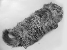 Cat Pencil Drawings