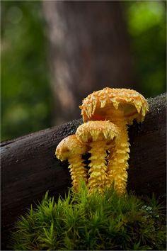 Mushroom Foraging | Food | Foraged food | #mushroomforaging http://www.foragekitchen.com