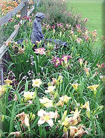 Daylily Landscaping Ideas That I 39 Ll Get Around To Some