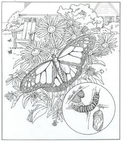 40 Coloring Pages Of Nature Around The House On Kids N Funco