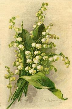 A lovely bouquet of Lily of the Valley is portrayed on the front of this Easter Postcard. The card has an undivided back which dates the postcard to Catherine Klein, Vintage Easter, Lily Of The Valley, Real Flowers, Paint Designs, Botanical Illustration, Vintage Postcards, Art World, Watercolor Flowers