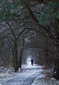 Winter - Gelderland, the Netherlands