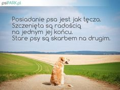 Dog Quotes, Portal, Album, Quotes For Dogs, Quotes About Dogs, Card Book