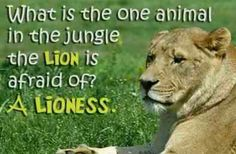 ALWAYS BOW DOWN AND TREAT YOUR LIONESS AS YOU ONE AND YOUR ONLY QUEEN.
