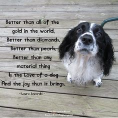 The Love of a Dog ♥ beats the hell out of a Swiss Sheep Sheepherder... Ha ha I can say that 'cause I'm Swiss (-: