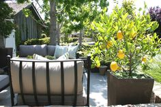 Pretty potted lemon tree on patio