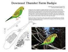 The Bonny Budgie | Downeast Thunder Farm