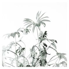 a e s t h e t i c // green minimalism // @lydburg