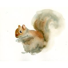 SQUIRREL Original watercolor painting 10x8inch ($22) ❤ liked on Polyvore featuring home, home decor, wall art, watercolour painting, watercolor wall art, water color painting, water colour painting and paper wall art