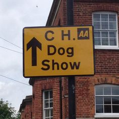 Champ dog show in town