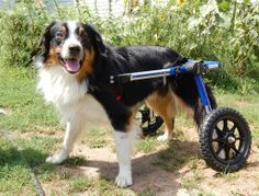 veterinary #wheelchair