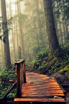 Forest Path, Stanley Park, Vanqouver, British Columbia, Canada