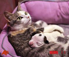 고양이 엄마와 아기 강아지