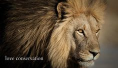 Earth Ark Safaris - Lion (Nxai Pan, Botswana)  Copyright Steven Stockhall