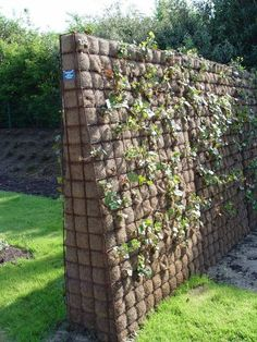 Wire mesh lined with coco fiber and filled with potting soil provides a hedge-like effect in a fraction of the space.