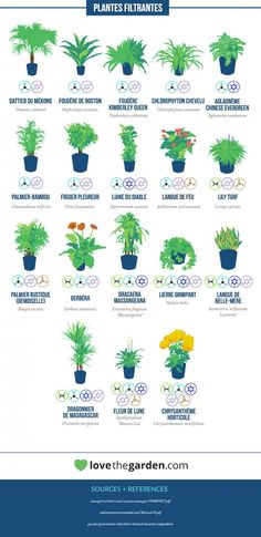Aquaponics System - Selon la NASA, voici les plantes les plus efficaces pour purifier l'air de votre intérieur Ficus, Air Filtering Plants, House Plants Air Purifying, Air Purify Plants, Bamboo Palm, Indoor Bamboo, Bamboo Plants, Air Cleaning Plants, Plants That Clean Air