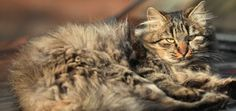 Do You Take Your Cats on Vacations With You or Leave Them at Home? - Catster