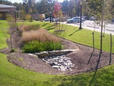 rain garden with stone check dam All Plants, Water Plants, Types Of Plants, Urban Landscape, Landscape Design, Rain Garden Design, Rain Collection, Water Management, Gardening Books