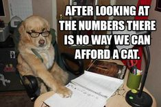 Number crunching dog is not a fan of cats, I guess.