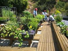 """This is one of the most well designed rooftop vegetable gardens I've seen on my never-ending journey through the world-wide web. It's in Southern California located on a commercial building rooftop and features sub-irrigated (aka self-watering) EarthBoxe Permaculture, Home Vegetable Garden, Rooftop Deck, Rooftop Gardens, Self Watering, Urban Farming, Urban Agriculture, Edible Garden, Organic Gardening"