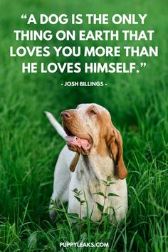 Dog Quote Collection 100 of the best dog inspired quotes puppy leaks Dog Quote. Here is Dog Quote Collection for you. Dog Quote 100 of the best dog inspired qu. Animal Love Quotes, Cute Dog Quotes, Puppy Quotes, Brain Training, Training Your Dog, Funny Dogs, Cute Dogs, If Dogs Could Talk, Quotes Pink