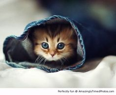Kitten spotted coming out of some jeans | Amazingly Timed Photos
