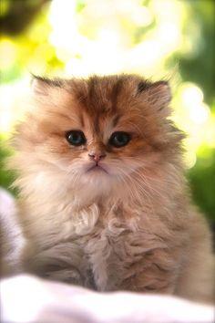 #babycat