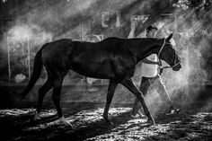 www.horsealot.com, the equestrian social network for riders & horse lovers | Equestrian Photography : Lucio Landa.