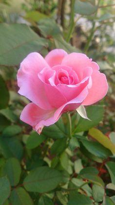 Per ROSITA la meva estimada germana epd 11/11/16 de jordi Ruzafa