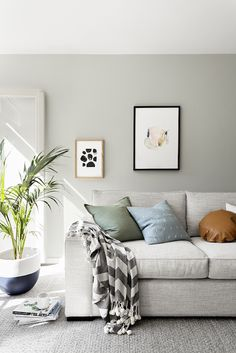 Real reno: This budget makeover makes creative use of paint - The Interiors Addict