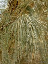 Abraham planted a Tamarisk tree at Beersheba as a recommitment to the Lord, calling Him the Everlasting God.  God is very clear: if we want our plans to succeed, we must commit them to God.Why do we not take this seriously?