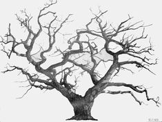 dead tree drawing black and white