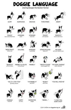 Doggie Language...I don't think the feeding one is completely accurate for my house as all of mine go nuts! But this is cute! #ShihTzu