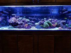 Reef Aquarium, Saltwater Aquarium, Reef Tanks, Corals, Community, Saltwater Tank