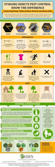 Differences between Bees and Wasps [Infographics] | ecogreenlove via @edenpest @eartheasy & @howstuffworks #savethebees