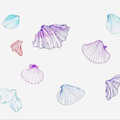 #海 #貝 #illustration #sketch #イラストレーター #イラストレーション #イラスト #shell #summer #夏