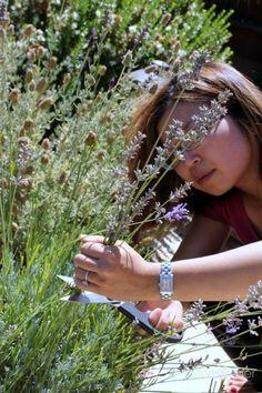 Spa Retreat: How to make lavender oil (cold pressed method)   Stark Insider