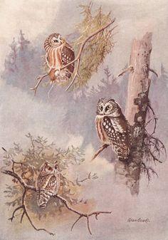 Búho de impresión, arte búho (Country Cabin Wall Art, 1930 Aves Ilustración) Bird Art Print No. 18-2
