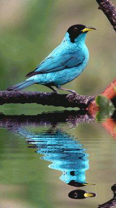 beautiful gifs Centerblog.net | Image trouvée sur le net - Merci à son(sa) créateur(trice)