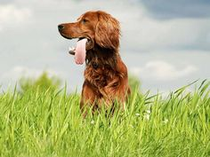 Conheça dez animais únicos da Irlanda