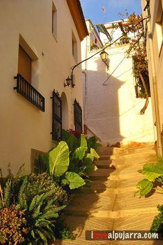 Rincón de Beires Plants, Street, Plant, Planets