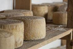 Pecorino di Filiano DOP, a Flavorsome Sheep Cheese from Basilicata Sheep Cheese, Italian Cheese, Olives, Italian Recipes, Wheels, Cheese, Italian Soup Recipes