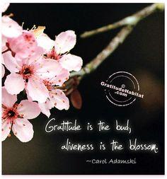 Gratitude = Aliveness