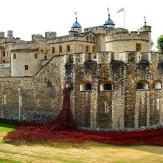 Installation to honor those lost in WWI at the Tower of London. Photo courtesy of bumbyfoto on Instagram.