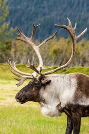 Image result for wildlife preservation