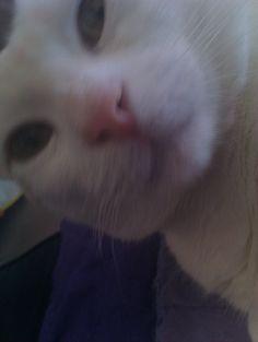 Super close up of SpMcG Esqu., Wunderkat.
