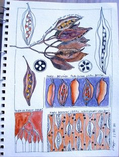seed pods sketches.