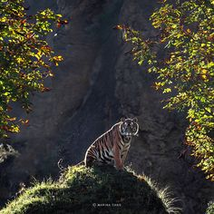 Marina Cano is an internationally renowned nature photographer who travels the globe to capture the most incredible photographs of wild animals I have ever seen. Tiger