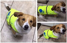 http://newswire.net/newsroom/pr/00089213-dog-raincoat.html