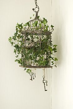 Will try this with my ivy plant